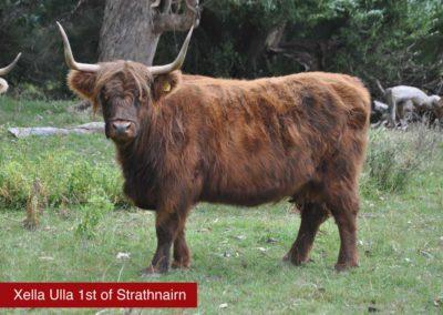 xella-ulla-1st-of-Strathnairn
